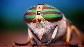 Life of insects (ФИЛЬМ - Жизнь насекомых)