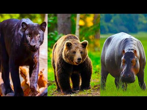 Learning Wild Animals Sounds Learn Animals for Kids Learn Domestic Animals Sounds For Children