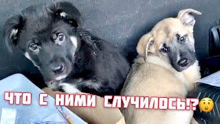 Сумасшедший день Похищение собаки Щенков укачало в машине