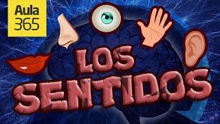 Los Cinco Sentidos | Videos Educativos para Niños