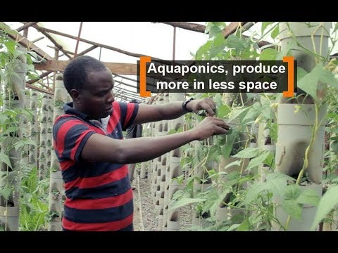 Kenya: Aquaponics, produce more in less space