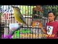 Pleci Pirlo Jr Paud  Bulan Materi Mewah By Mr Widie Cimotz  Mp3 - Mp4 Download