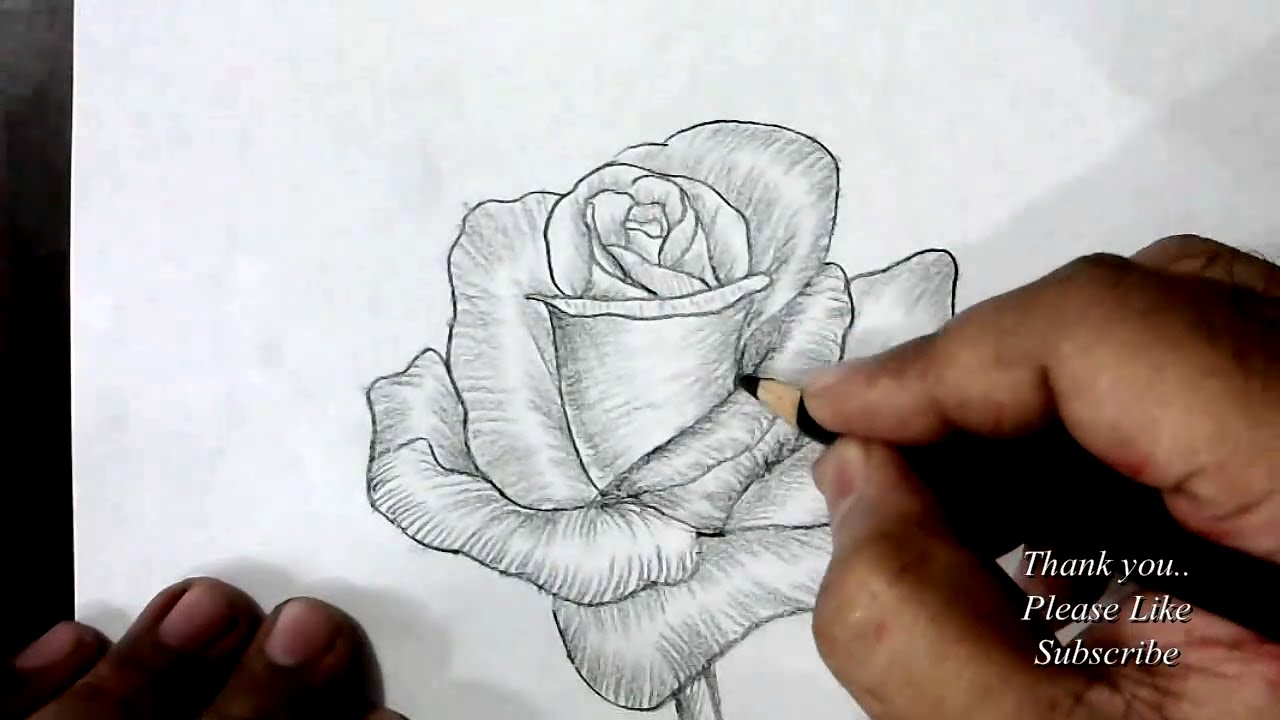 how to draw a rose with charcoal pencil youtube