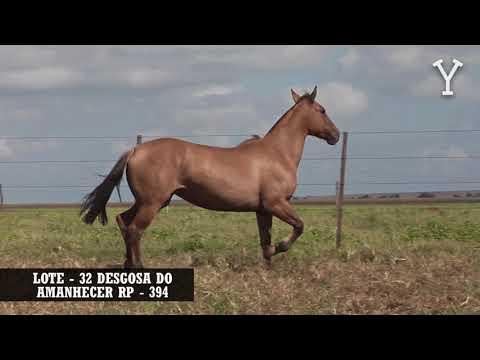 LOTE   32 DESGOSA DO AMANHECER RP   394