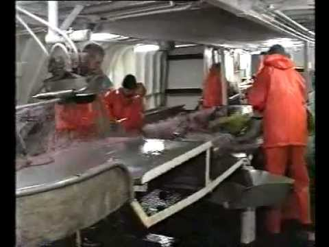 Seafood Processors Profit From Use Of Insulated Containers From DACO