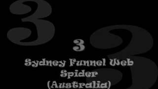 Top 10 Most Venomous Spiders!