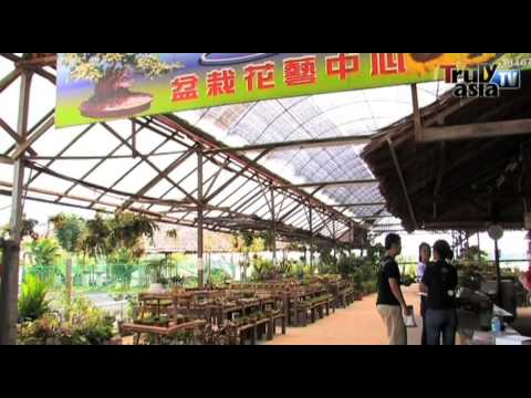Reality Series-ZenXin Organic Farm new