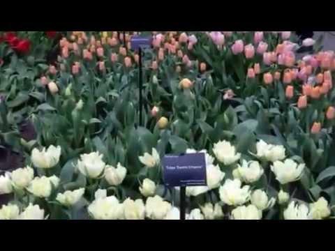 Indoor Tulip Exhibition - Keukenhof 2014 - Tulips in Holland