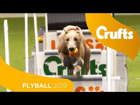 Flyball - Team Quarter Finals | Crufts 2019