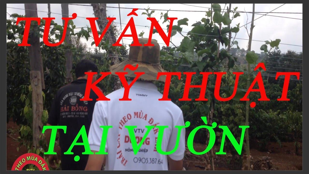 Hỗ Trợ Kỹ Thuật Chăm Sóc Cây Chanh Dây , Cây Tiêu Tại Vườn Cho Nông Dân