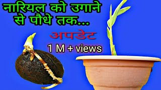 How to grow Coconut plant germination to plant at home.  hindi - (urdu)