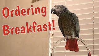 マスクメロンとピザをよろしく!ヨウムのアインシュタイン、朝ご飯を注文する