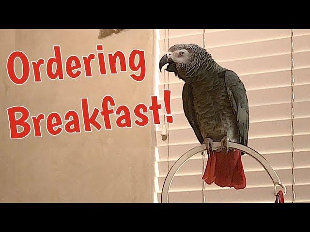 Einstein Parrot places breakfast order