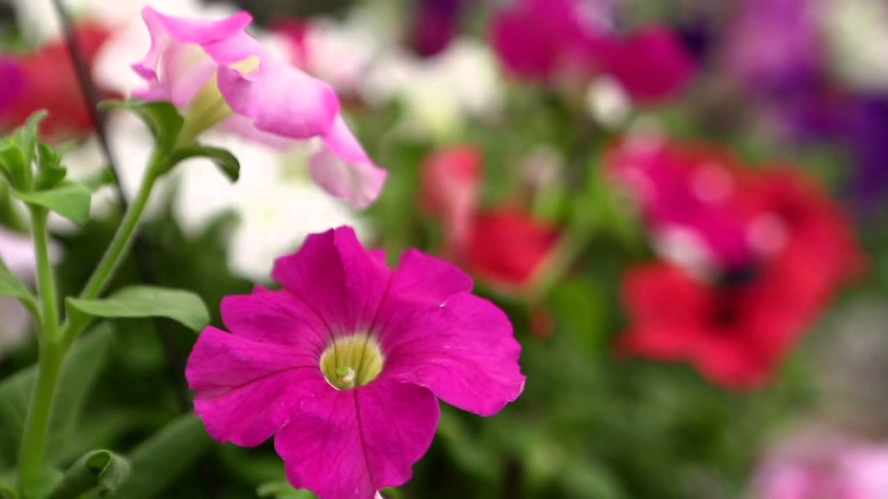 flores para jardim de inverno:Flores coloridas de inverno – YouTube