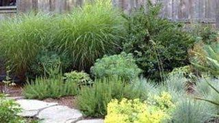 видео Злаковые растения в ландшафтном дизайне