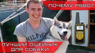 Petcomer P880 - Лучший электроошейник для собак!