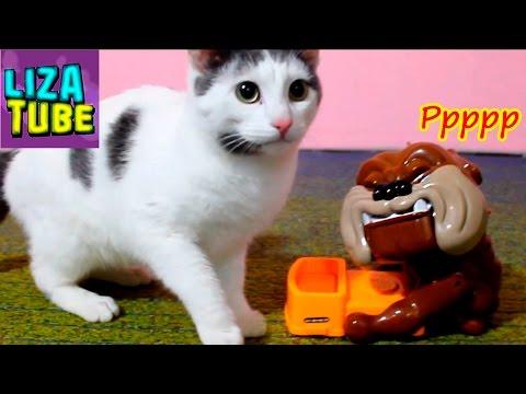 Реакция кота на СОБАКУ КУСАКУ и ПРИВЕТЫ от наших питомцев \ LizaTube