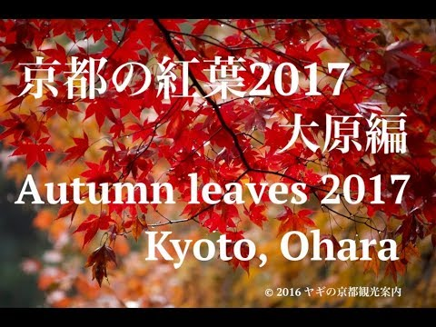 【2017】The Autumn leaves report in Kyoto 1/京都の紅葉大原編