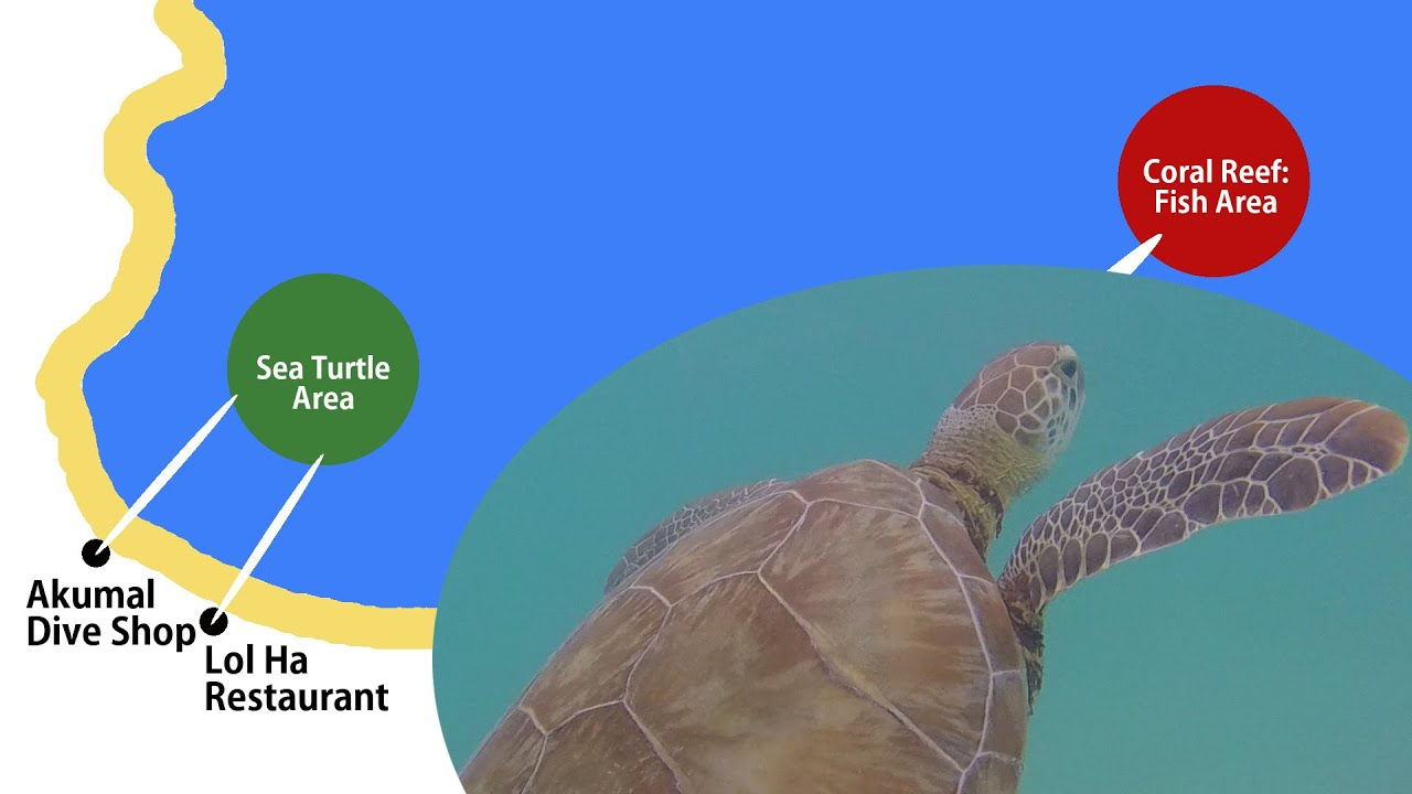 Akumal Free Snorkeling + Map to find Sea Turtles and Coral Reef ...