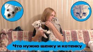 Что нужно щенку и котенку I 4 октября - день защиты животных