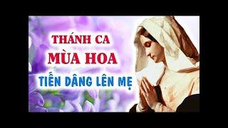 Thng Dng Hoa c M - Nhc c M 2018 Tuyn Tp - Thng Mn Ci