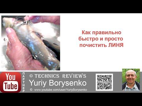 Вопрос: Почему у одних пресноводных рыб (сом,линь) нет чешуи, у других есть?