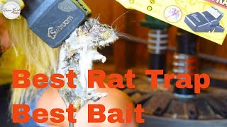 BEST BAIT TRICK FOR SMART RATS |  BEST TRAP | BEST WAY  | How to KILL Rats