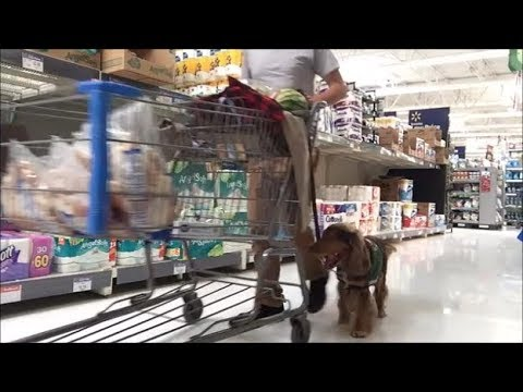 Best Dog Products & Service dog at Walmart
