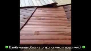 Бамбукове полотно (шпалери): види, фото, відео