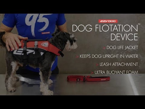 How To Fit A Dog Life Jacket - EzyDog DFD