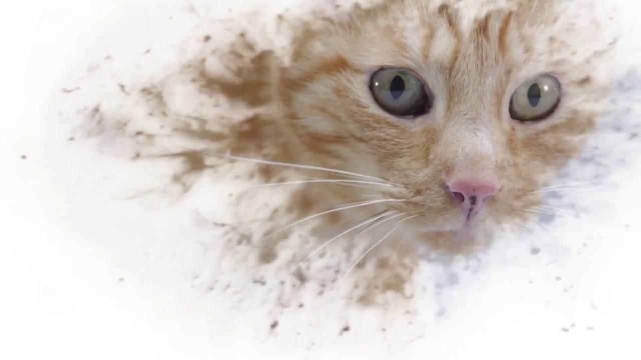 Заменитель кошачьего молока royal canin babycat milk доступная цена, высокое качество. Купить недорого в киеве. Доставка по киеву и украине.