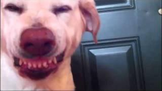 YouTube's 'Guilty Dog' Denver Visits GMA | CUTE ANIMALS (Episode 3)