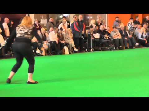Dog Challenge Miniature Bull Terrier Crufts 2016 Judge Elaine Clark (FourHeatons)