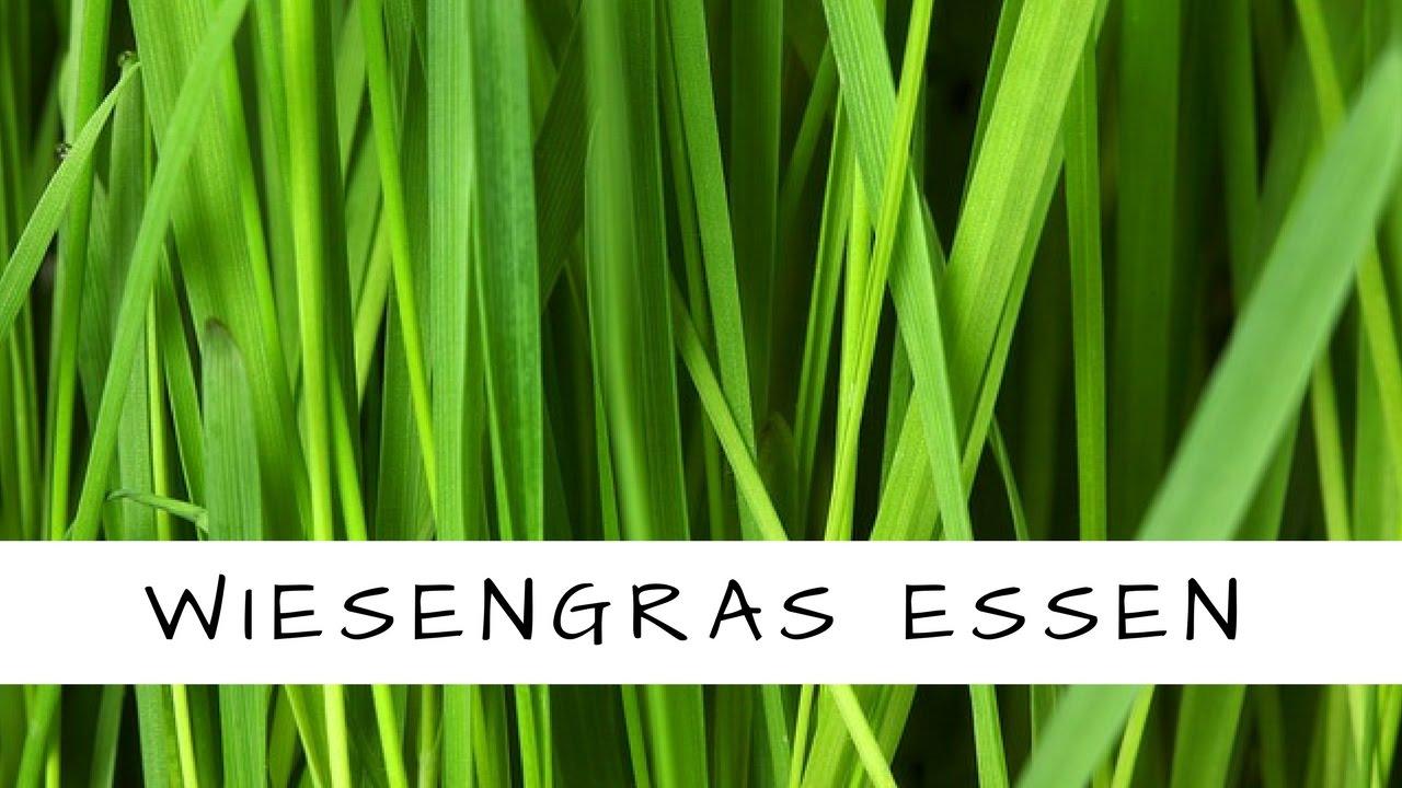 Essbares Wiesengras/ Süßgras - kostenlos und frisch in der Natur ...