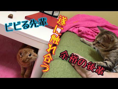 先住猫と野良保護猫!遂にケージ解放して触れ合う!