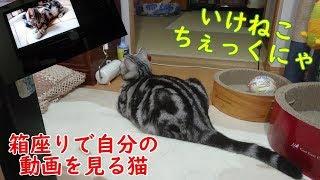 【愛猫】自分の動画をチェックしている猫