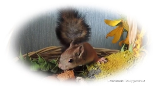 Squirrels and serve delicious gifts to of spectators! Вкусные подарки от зрителей!