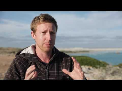 Southern Right Whales research