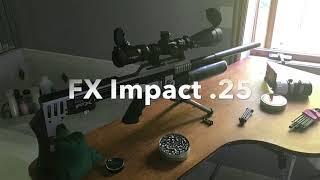 Backyard Air Rifle Squirrel Hunting