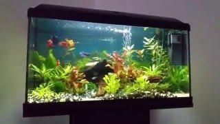 Akvárium 54L - jeden měsíc po založení
