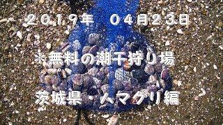2019年04月23日茨城県神栖市にある日川海岸に潮干狩りして参りました。...