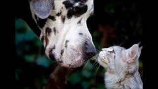 Прикольные фото животных, смех