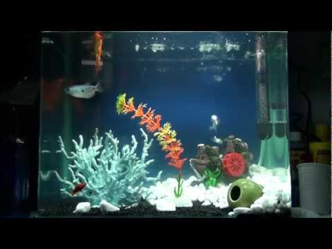 aquarium nano 30l youtube. Black Bedroom Furniture Sets. Home Design Ideas