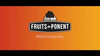 #MotorCooperatiu