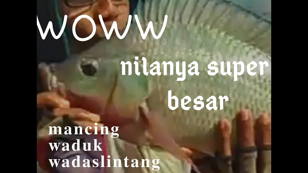 Spot Mancing Ikan Gabus Terdekat