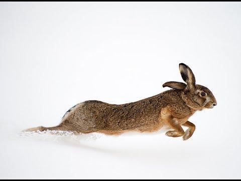 Охота на зайца, Сугробов В