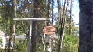 Squirrelbaffle.avi