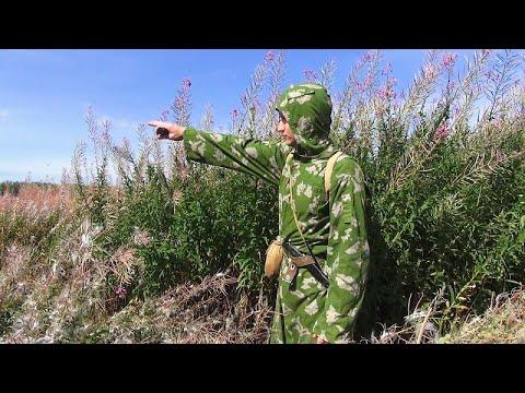 Вопрос: Поспела ли черника в лесах в средней полосе России, можно собирать?