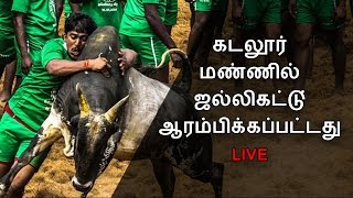Live: Cuddalore Jallikattu Started