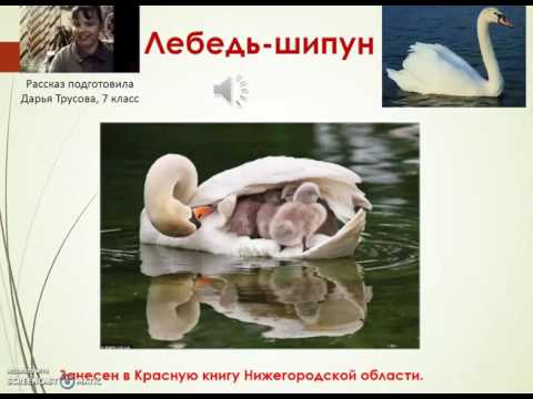 Животные из красной книги Нижегородской области